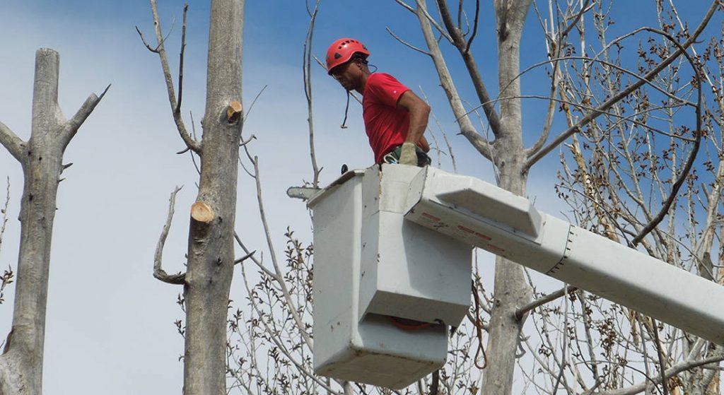 Expert Tree Trimming in Denver