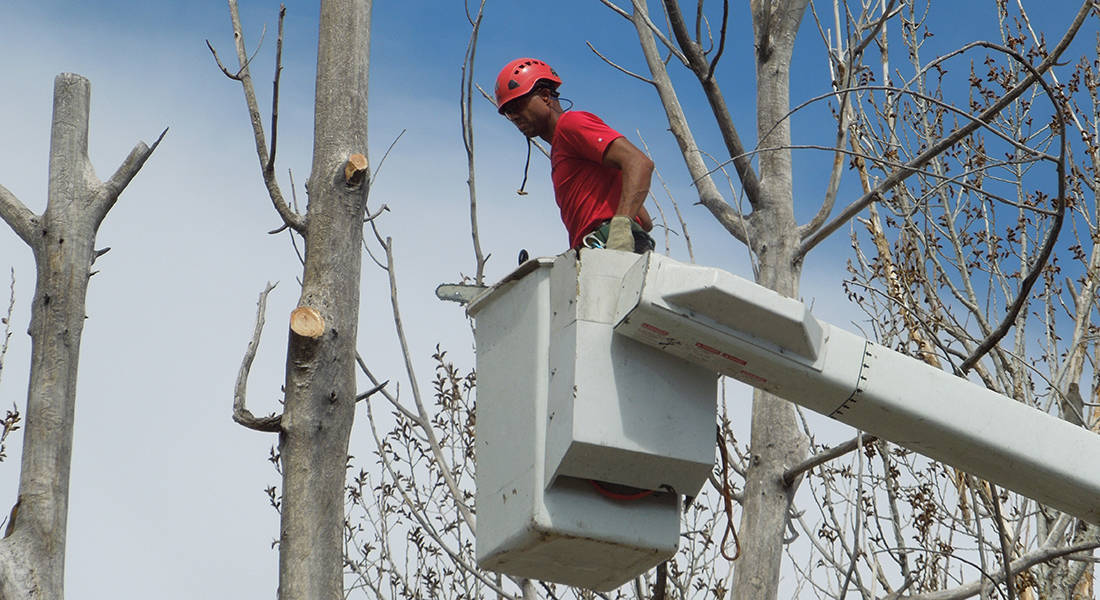 Find An Expert Tree Trimmer In Denver